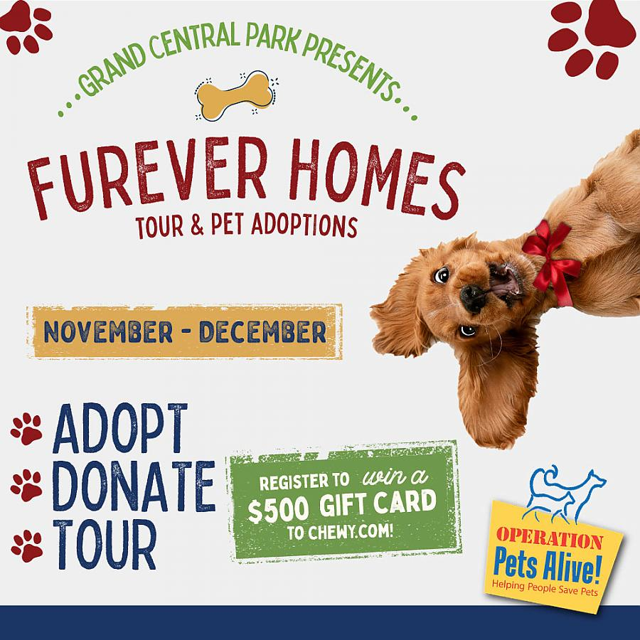 Find Your 'Furever' Friend and Forever Home