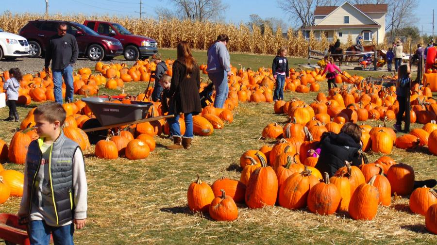 Fall Festivities, Pumpkin Patches and More